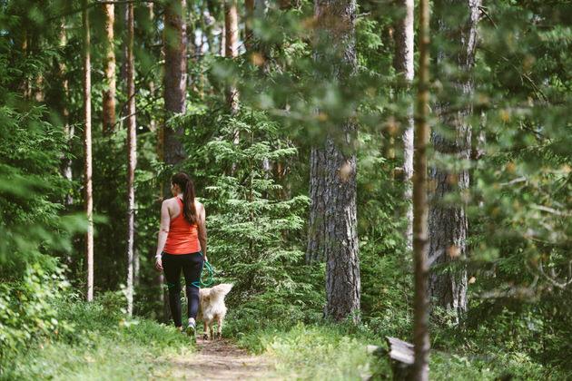 Nainen-kavelylla-metsassa