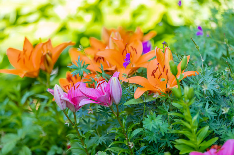 Uuden-kukkapenkin-kukat-Riihon-Majatalo